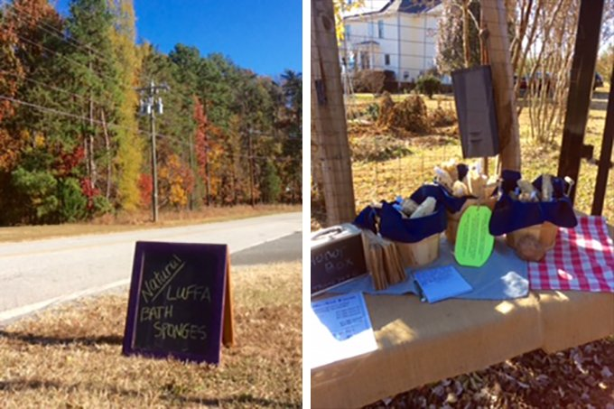 Forget Me Not Farm in Hillsborough, NC sells natural loofah